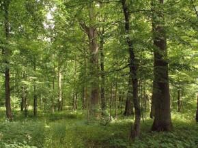 Superkame mišką